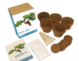 Cadeau Grow It - Bonsai boom
